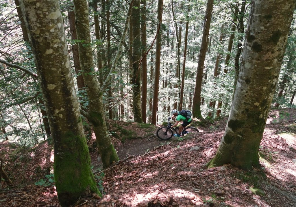 Mountain Biker riding the beech forests in the Alps