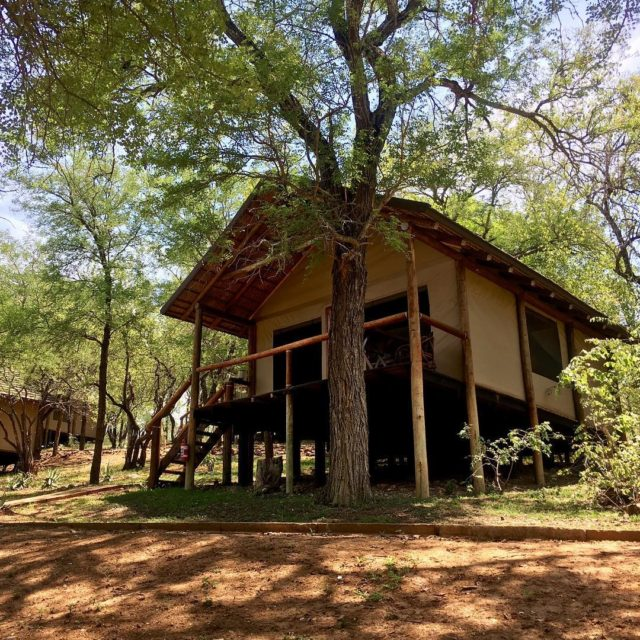 Home for a little while kruger safari greaterkruger southafrica karongwehellip