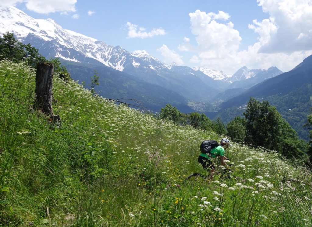 Mountain Biker riding through flower field in the Alps
