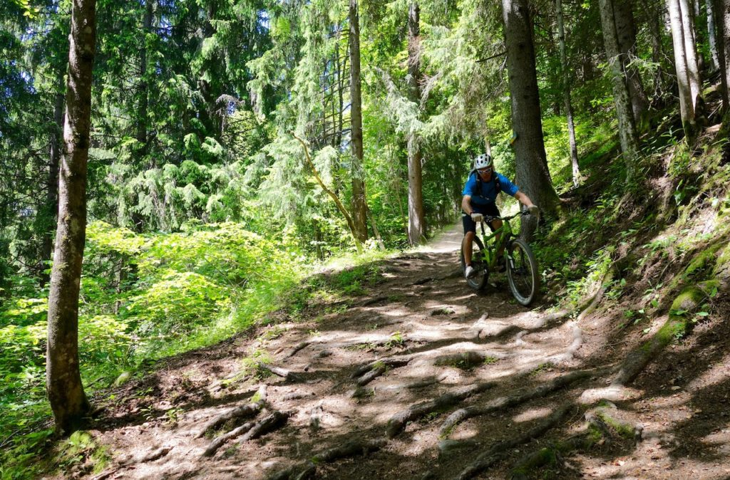 Mountain Biker riding rooty descent in the Alps